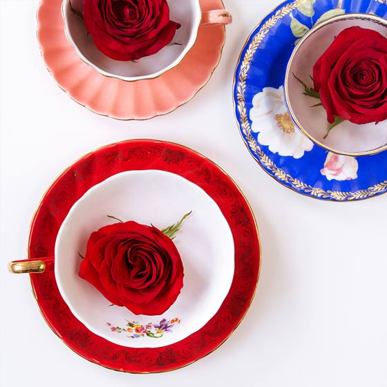 red rose heads in tea cups