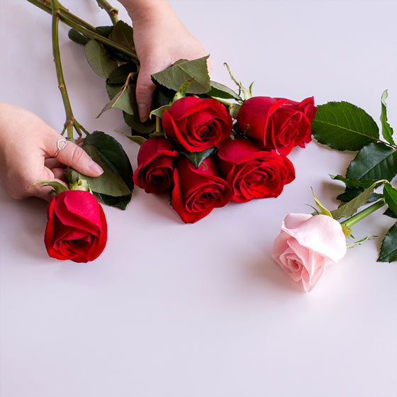 hands holding red roses