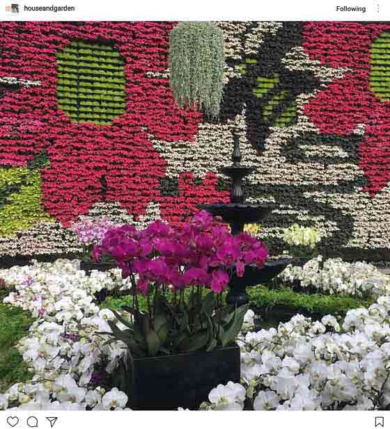 colourful flower wall and flower bed