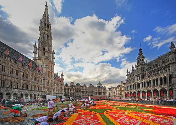 The Brussels Flower Carpet