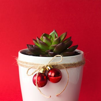 The 2016 Interflora Christmas Gift Guide
