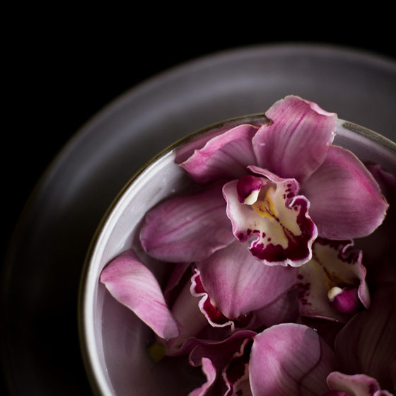 How to care for your cymbidium orchids