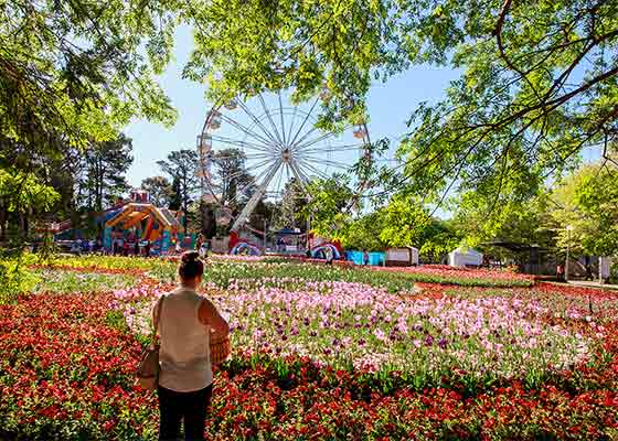 Fields of flowers at Floriade 2016