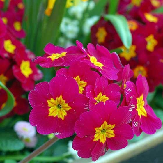 flower names  interflora, Beautiful flower