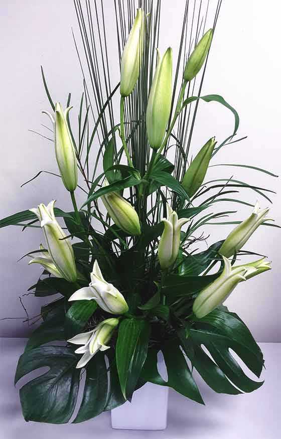 flower care tips - closed lily arrangement