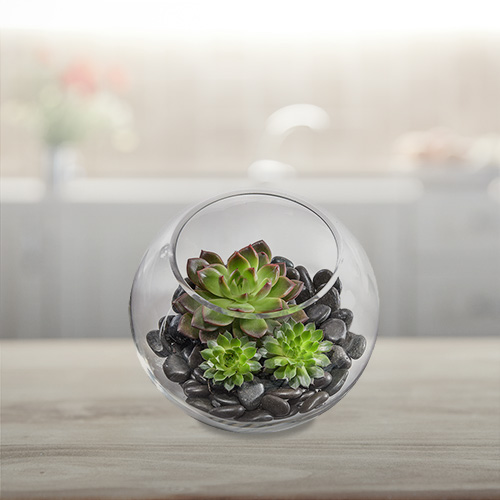 Interflora Father's Day succulent gift