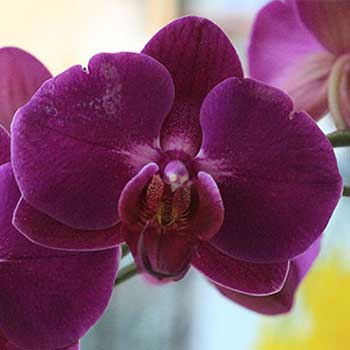 Flowers & Their Colours: Orchids