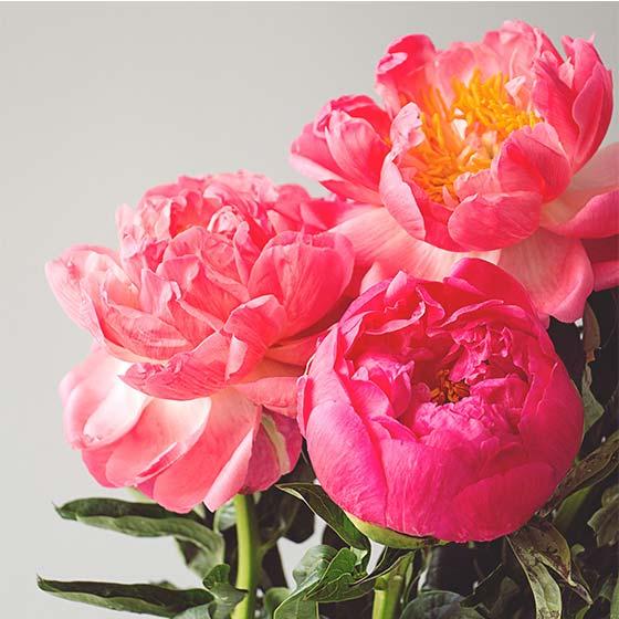 Spring flowers interflora top 5 spring flowers bright pink peonies mightylinksfo