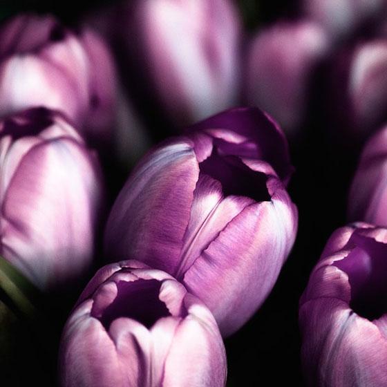 puple flowers
