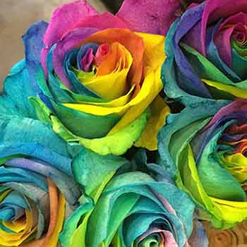 Blue And Rainbow Roses: Do They Exist?