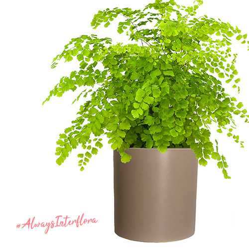 green indoor plant from Interflora