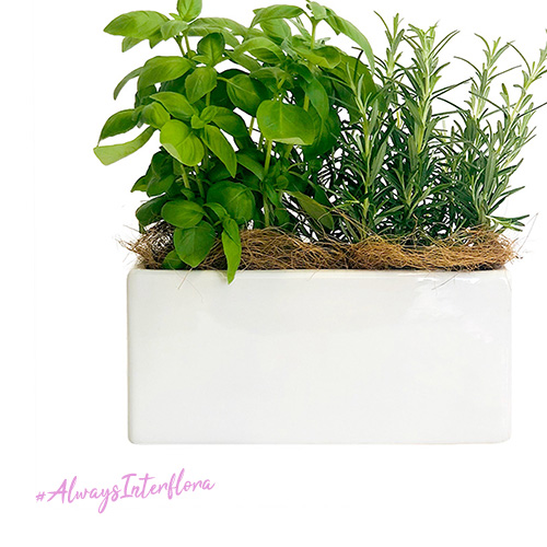 miixed herbs planted in ceramic container