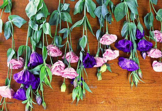 Lisianthus flowers are cheaper than others - an option for affordable wedding flowers