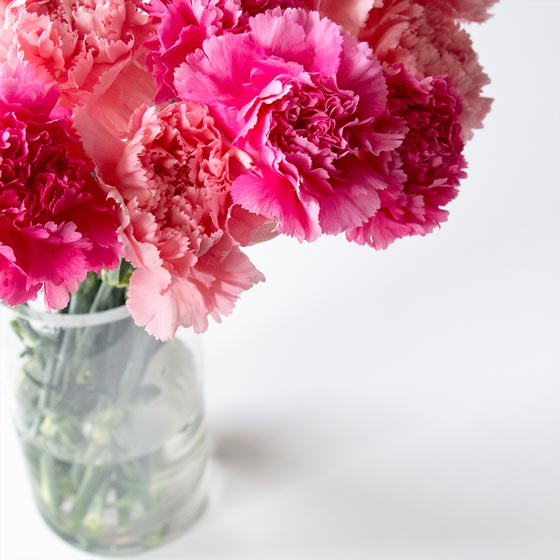 vase of bright pink carnations