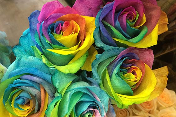 blue and rainbow roses interflora