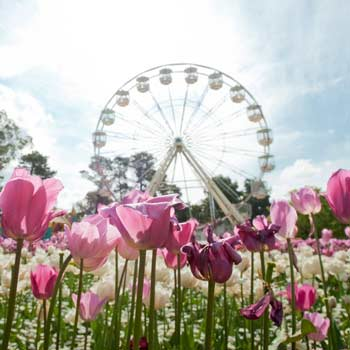 The Biggest & Best Flower Festivals from Around the World