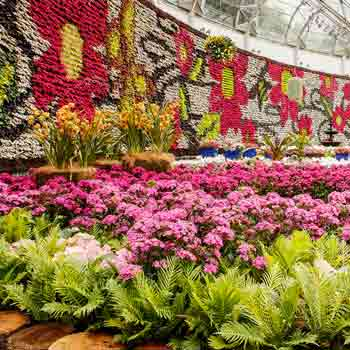 All About Flowers: Don't Miss This Exhibit