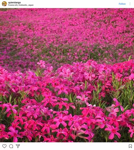 Places surprisingly filled with flowers interflora pink flower field mightylinksfo