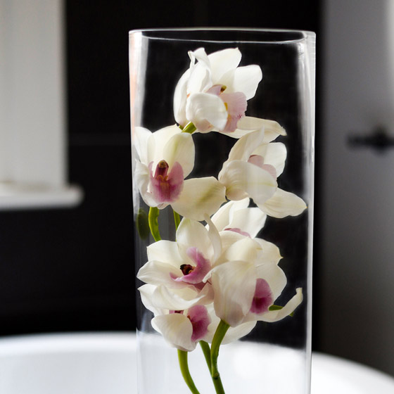 white orchids in tall vase