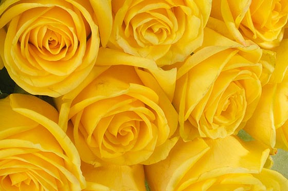 The meaning of roses interflora yellow rose meaning mightylinksfo