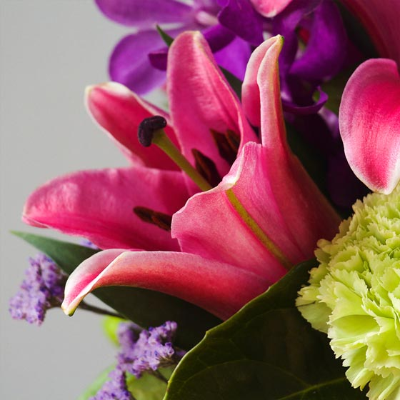 bright pink lilies