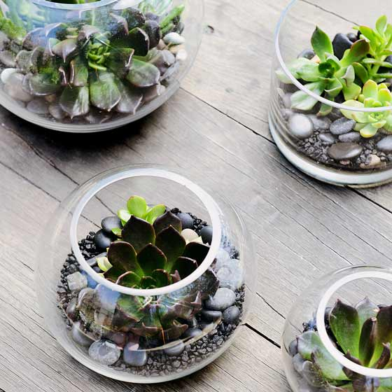 How to Make a Terrarium In a Few Easy Steps