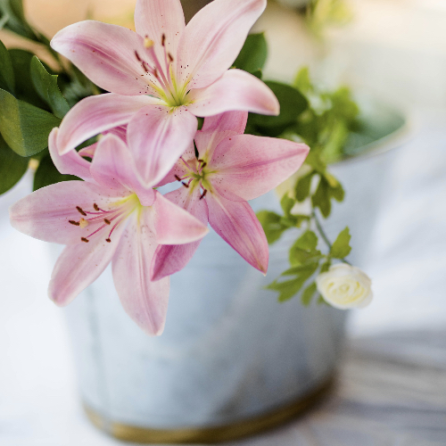 pink lilies in a pot