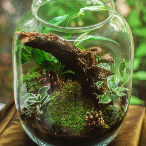 green terrarium in a clear glass jar