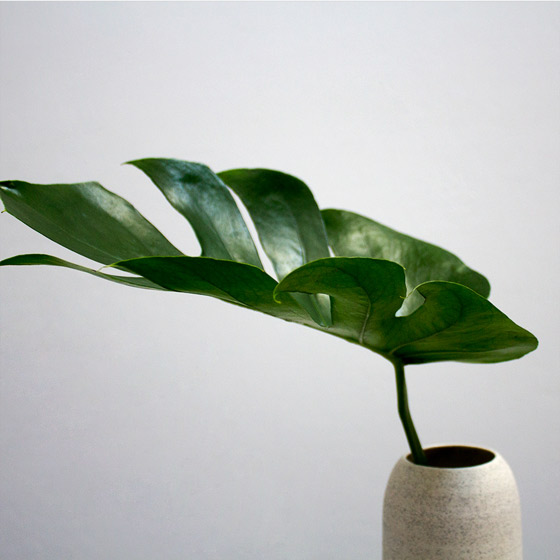 green foliage in vase
