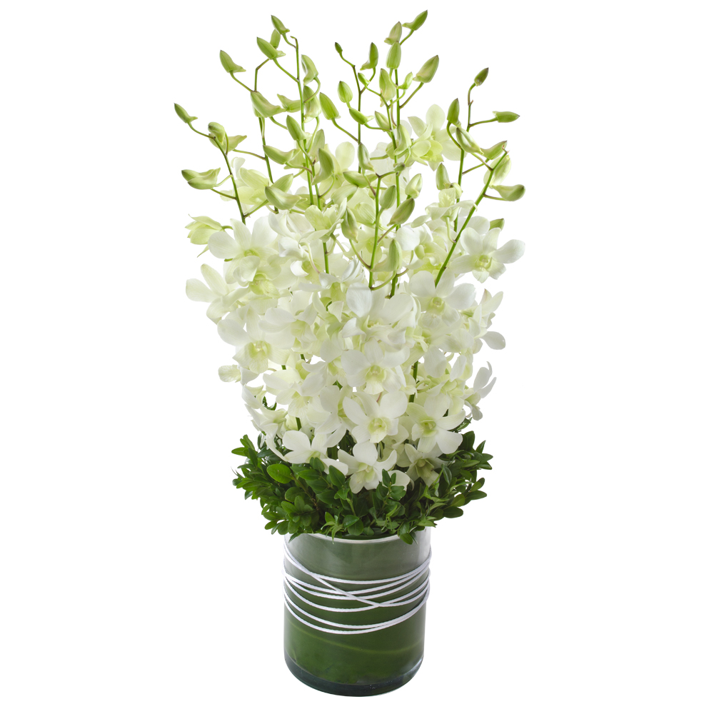 Image of Birthday Flowers - Orchids Flowers