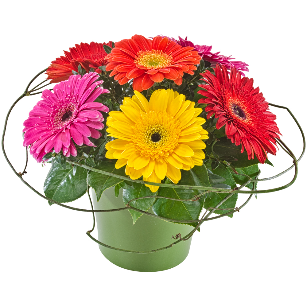 Image of Birthday Flowers - Gerberas Flowers